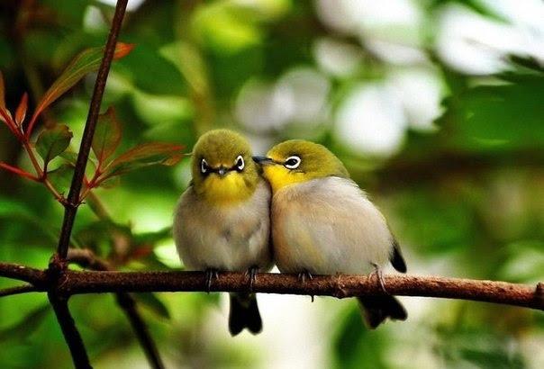 Трогательные фотографии любви и дружбы животных