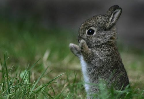 Cute_bunny_large