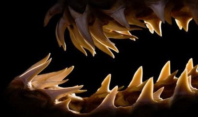 Шипы и зубы всех существ на Земле растут по единой математической формуле