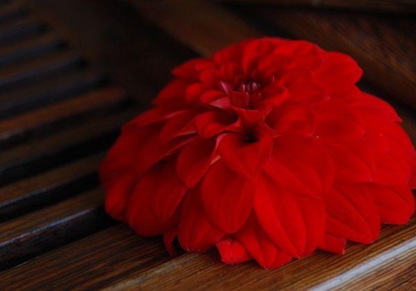 Teaflower