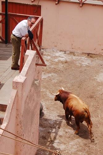 Roberto Puga en toriles de Acho