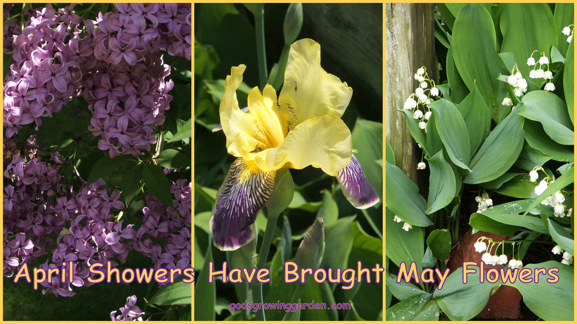 May Flowers by Angie Ouellette-Tower for godsgrowinggarden.com photo BlogStuff_zps90813549.jpg