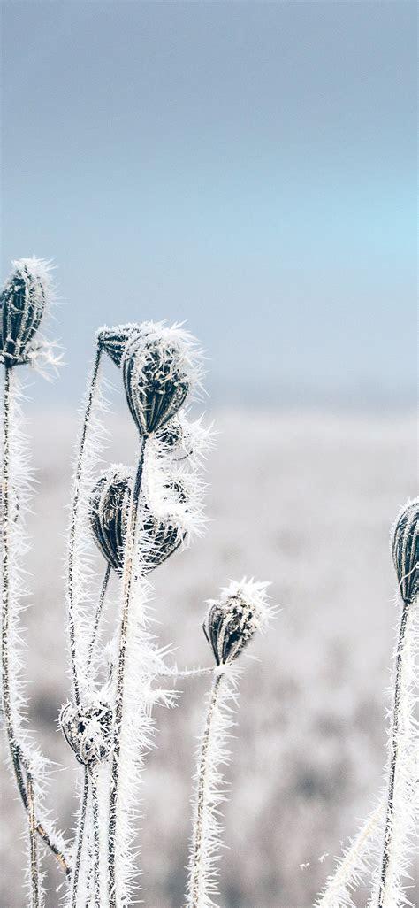 winter wallpapers  iphone ipad  macbook