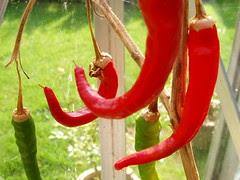 "September 21st ""Red Hot Chilli Peppers"""
