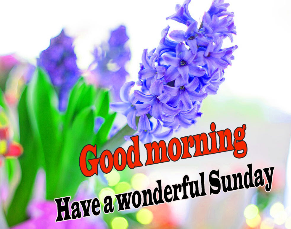 Sunday Good Morning Wishes Images Wallpaper HD