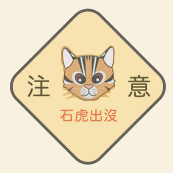 消失的台灣石虎