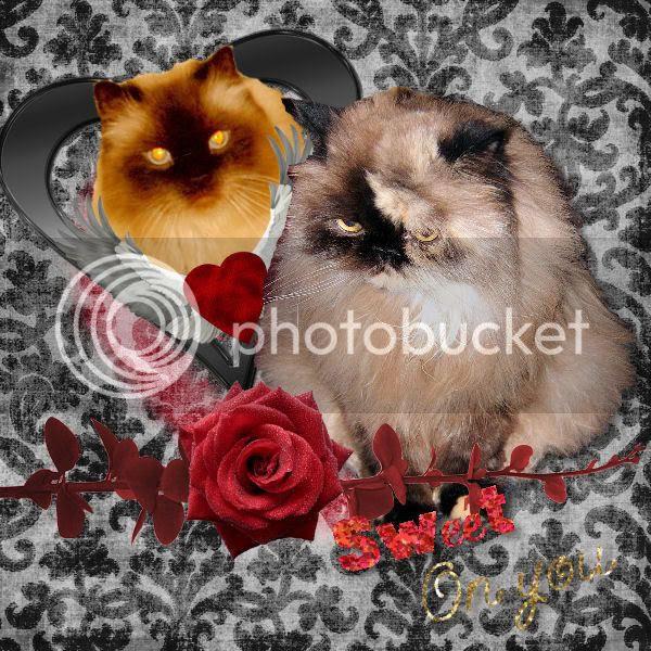 Sweet Praline's Valentines to Bhu