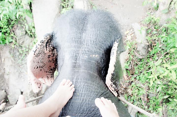 phuket elephant riding typicalben 5
