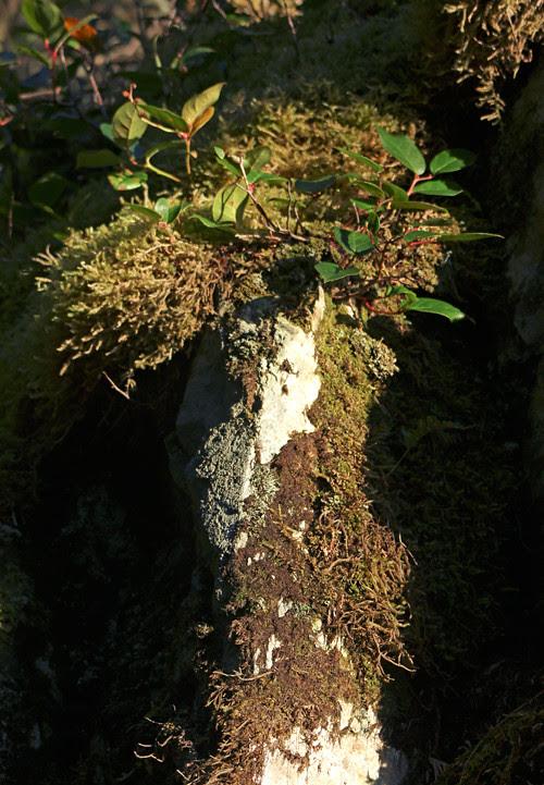 mossy rock, Kasaan, Alaska