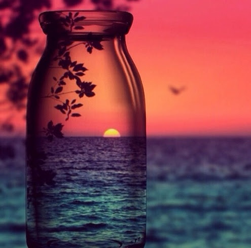 beach, bird, blue, fly, glass, nature, pink, sea, sky, sun, sunset, tree