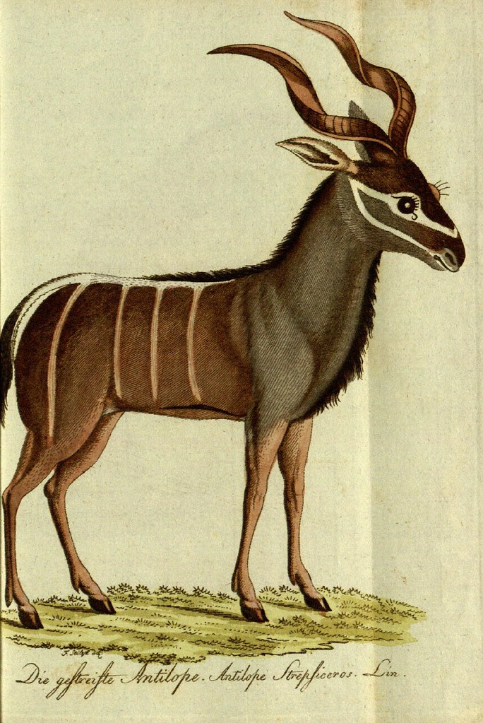Antelope sketch from 19th c. natural history book