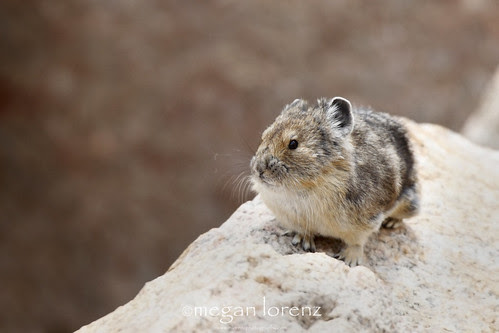 Cute Critter by Megan Lorenz