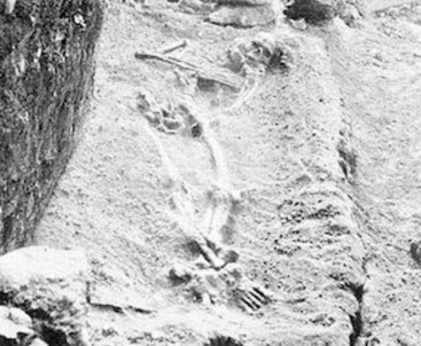 """A """"gigantic"""" skeleton in situ from the Mentone caves. Popular Science 48, 1895."""