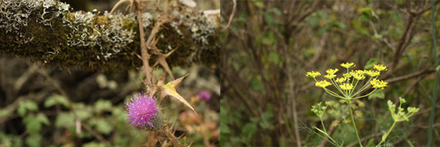 Thistle and Fennel
