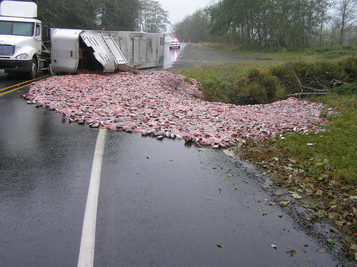 Fish heads and guts spill on US 101