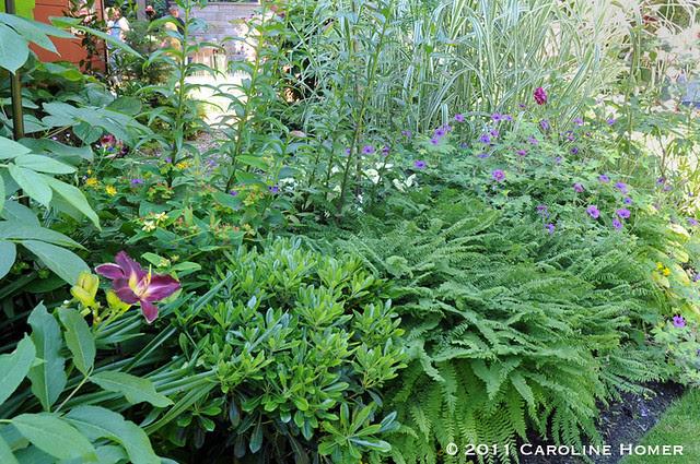 Shade-loving perennials