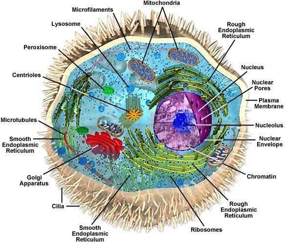 Eukaryotic Organisms