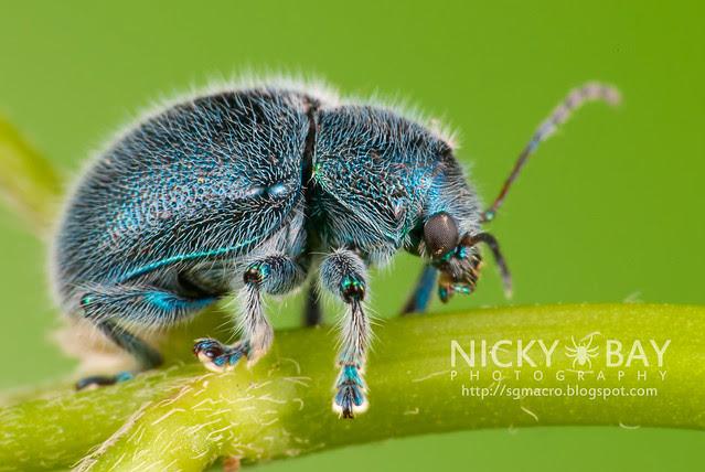 Beetle - DSC_4556