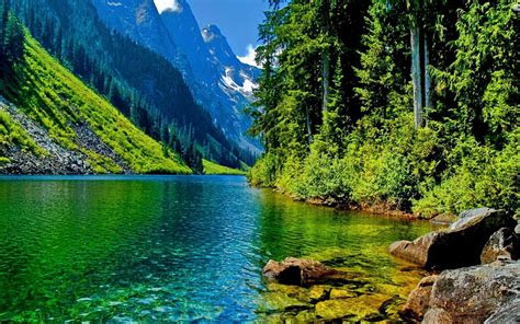 green water   wonderful green nature hd wallpaper