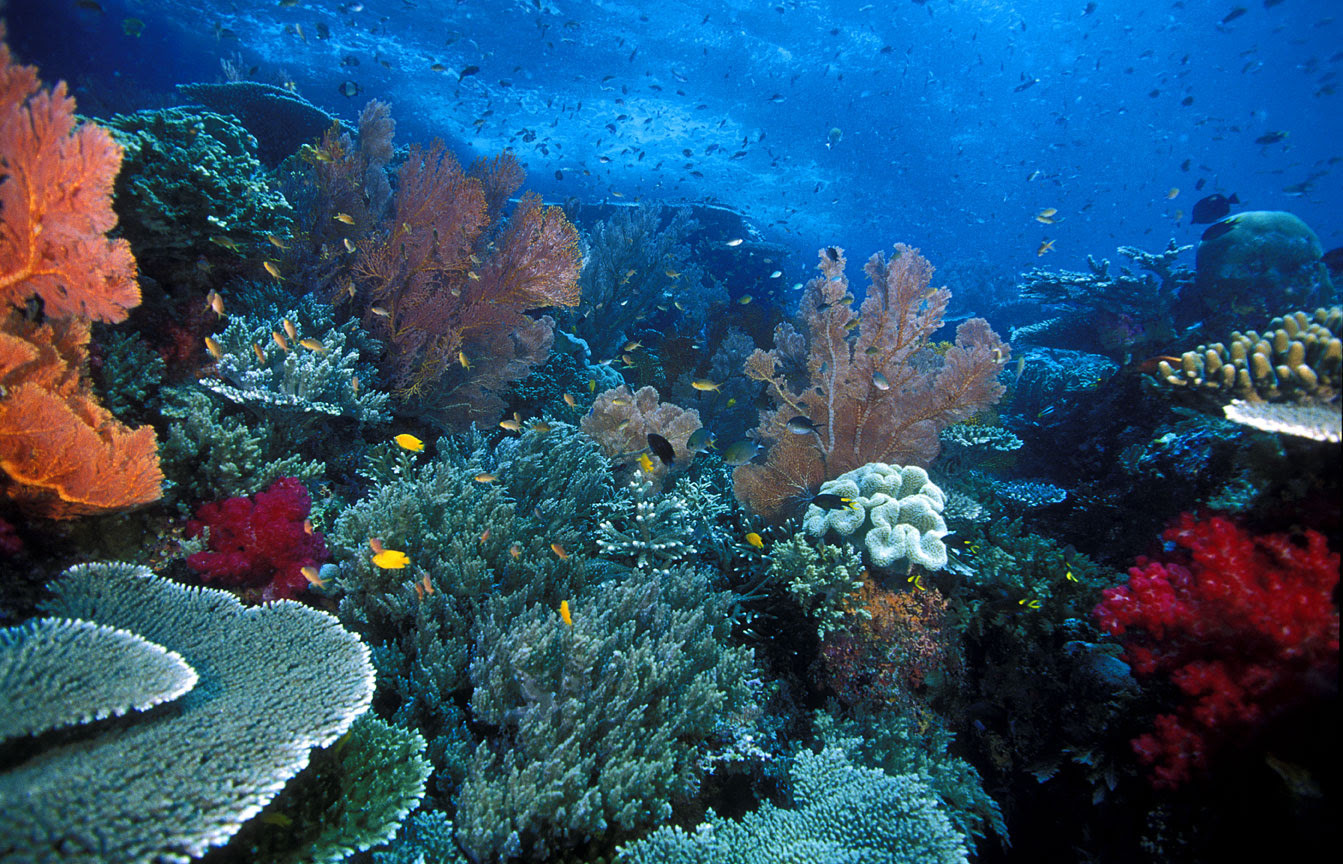 http://mahdiyaturrahmah.files.wordpress.com/2012/12/wisata-bahari-raja-ampat-pulau-papua-yang-eksotis-22.jpg