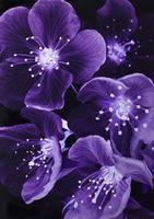 I have just published Purple blossum on Artfinder