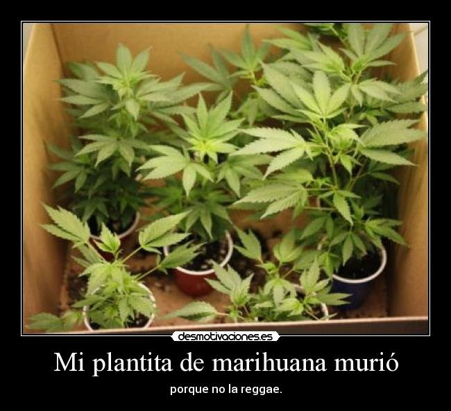 Mi Plantita De Marihuana Murio Desmotivaciones