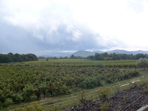vignes sous l'orage.jpg