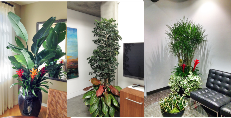 Photos And Video Interior Plants Rental Design And Service