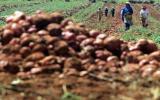 Descubriendo la agricultura, por Richard Webb