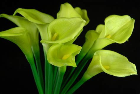 """Natural Touch Hand Tied Green Calla Lily Wedding Bouquet 14"""""""