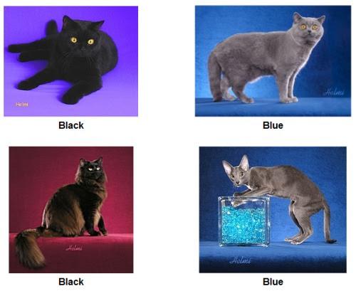 solid cat coats