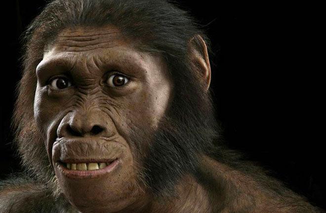 Resultado de imagen de Australopithecus sediba