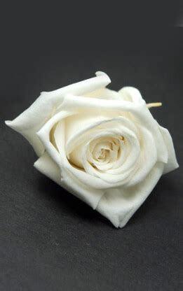 Preserved Roses White 1in (15 roses)