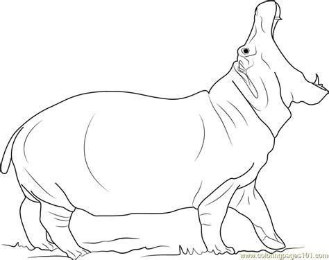 angry hippopotamus coloring page  hippopotamus