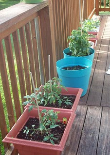 Plants_52012