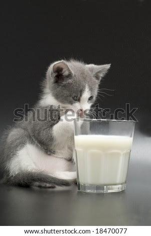 Makanan Yang Berbahaya Untuk Kucing Zona Kucing