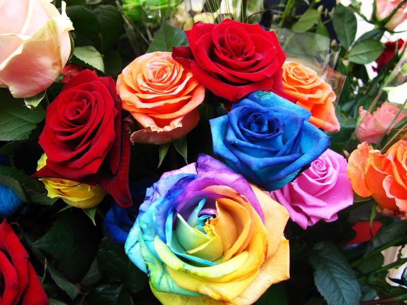 Descubre Todo Sobre Las Semillas De Rosas