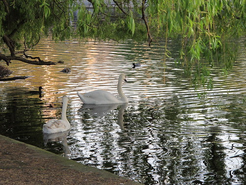 Early Evening in The Regents Park