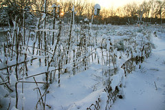 snow covered community gardens