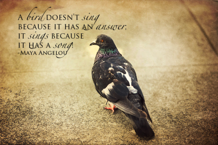 Quotes About Bird Photography 27 Quotes
