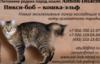 кошки, пикси боб, котята, кошка рысь, пиксибоб