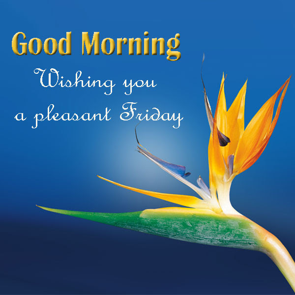 Good Morning Friday Wishes Images Good Morning Images Quotes
