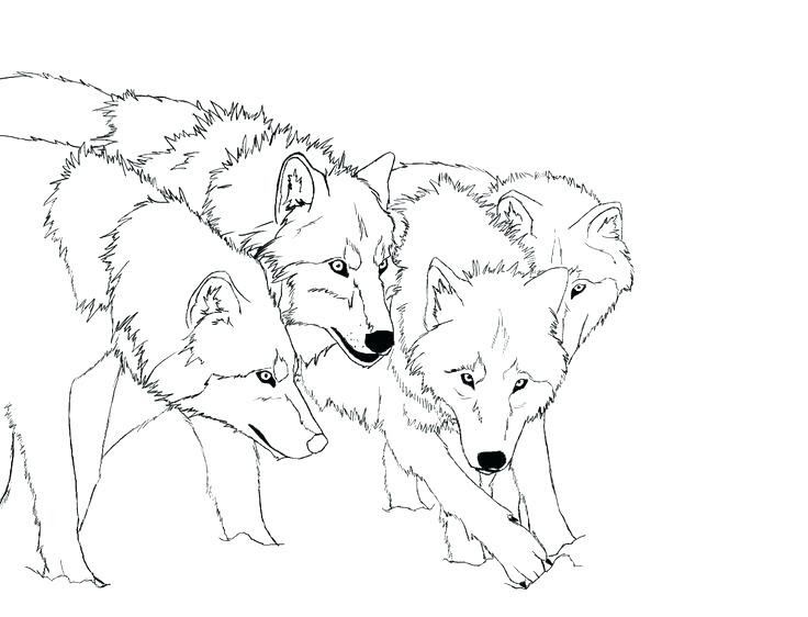 Fox And Wolf Coloring Pages at GetColorings.com | Free ...