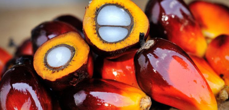 Indonesia Looks To Exchange Nigeria's Crude Oil For Palm Oil
