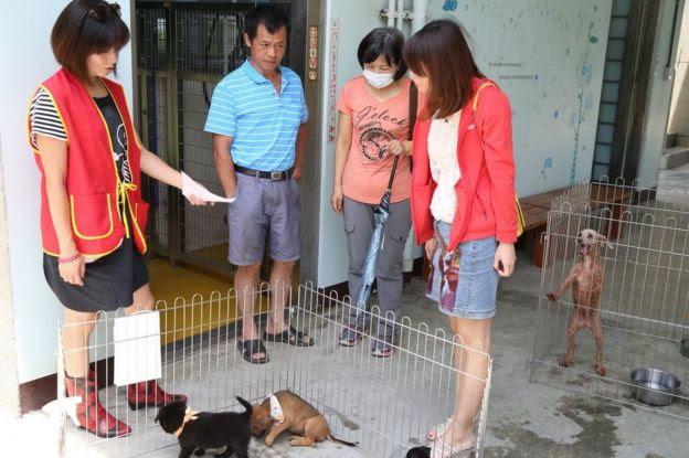 Abrigos de cães