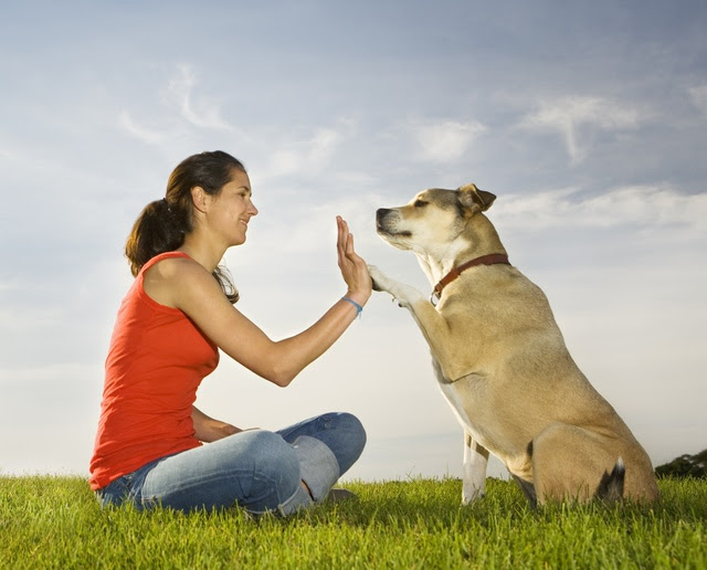 7 Reasons Adopting A Dog Is The Best Idea Pet Like That Blog