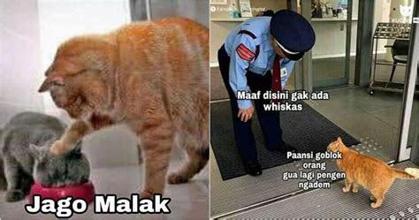 meme lucu kocheng oren kucing bar bar viral  bikin