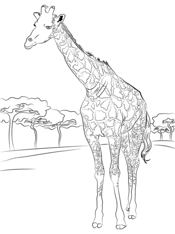 1010+ Free Printable Coloring Pages Giraffe Picture HD