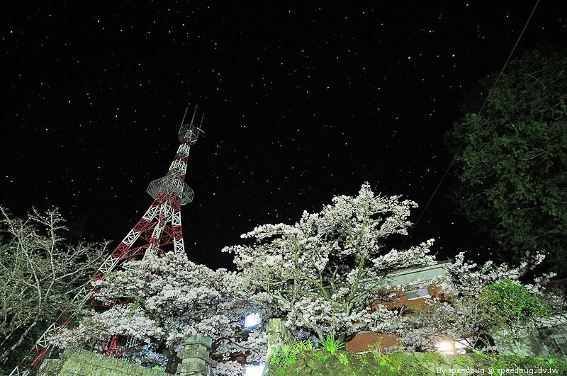 阿里山櫻花季7