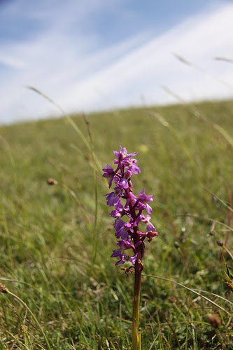 Orchid at Wilmington End by ultraBobban